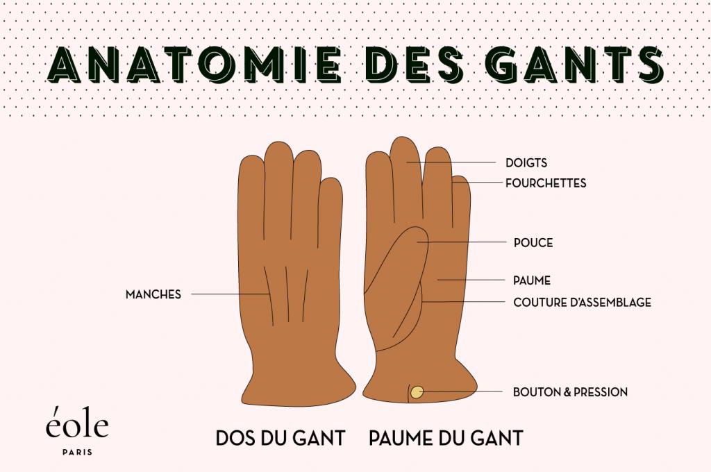 Anatomie des gants - EOLE PARIS
